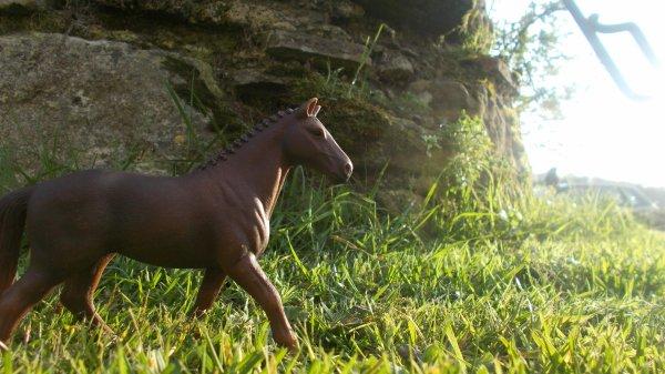 """Bienvenue sur le blog """" Ranch des chevaux d'or """" !"""