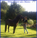 Photo de Prince-Noir-Des-Mares