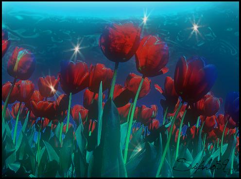 Champs de Tulipe Sous  Marine