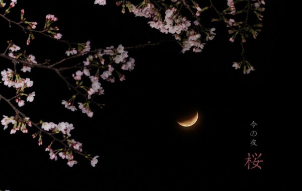 【Loqi's photography】Sakura -night