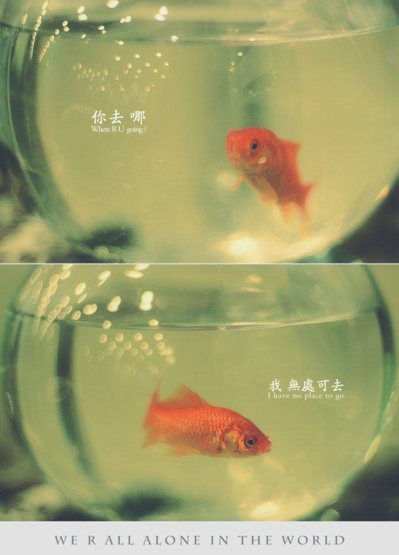 Caged fish
