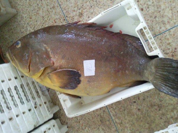 ║▌║││ █ ▌│║█║▌║║au marché de dakhla (poisson amlou)║▌║││ █ ▌│║█║▌║║