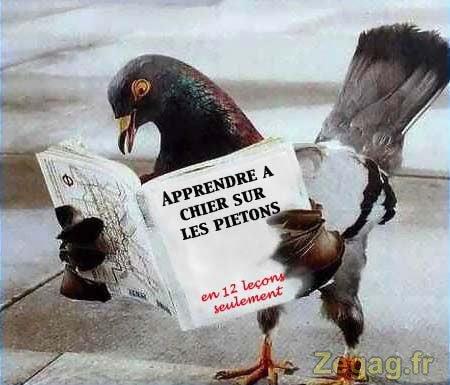 Présentation de moi, Pigeon-qui-chie-sur-passants :)
