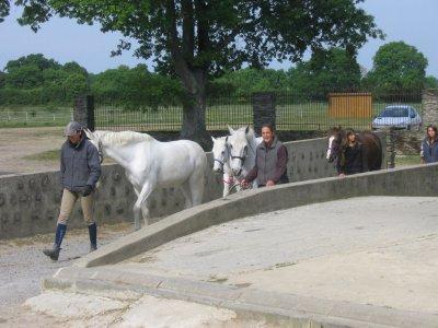 alors isa et les autre entrein de ramenner les chevaux du pré