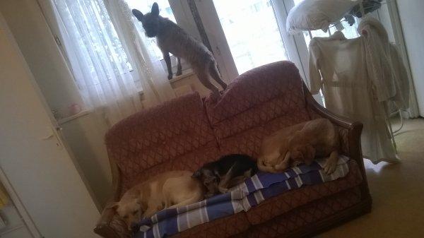 4 de nos loulous