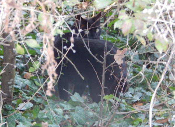 chat cacher qu'a moitier