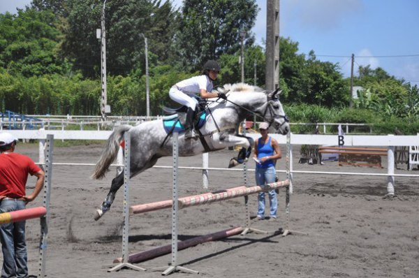 """Ainsi la prochaine fois que vous entendrez la phrase, """"simplement un cheval"""", contentez vous de sourire, parce qu'ils ne peuvent """"simplement"""" pas comprendre ♥"""