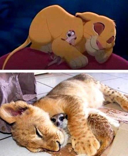 Timon et Simba