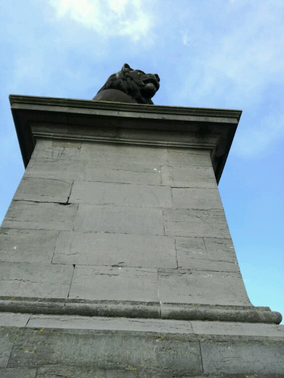 Lion Waterloo