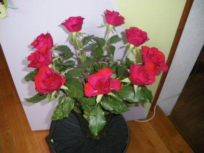 Superbe bouquer de roses rouges offert par mon hom'