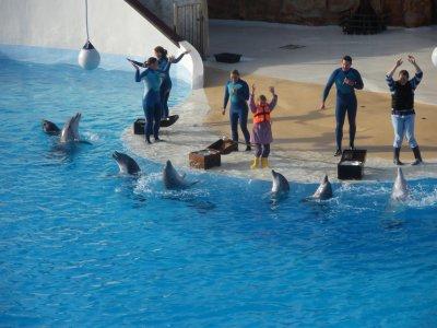 Spectacle des dauphins à notre arrivée.