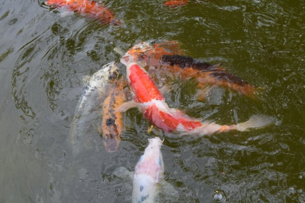 poissons mai 2016