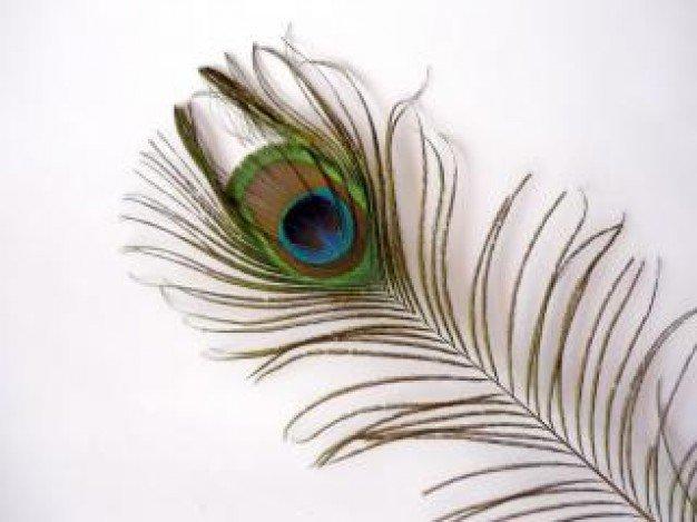 la plume de paon