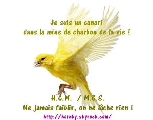 H.C.M. / M.C.S. Nous sommes des Canaris !