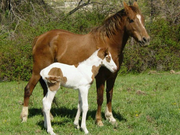 Lui et sa maman