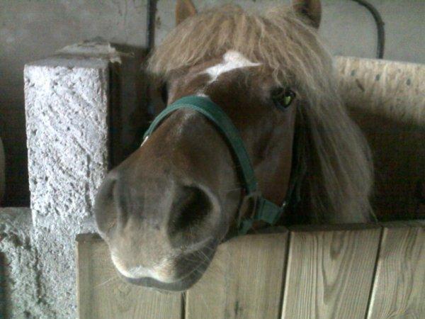 poney de mon centre équestre!