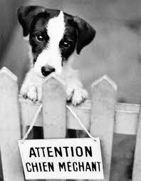 les chiens dit dangereux