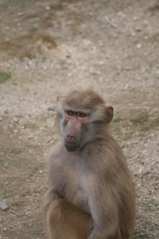 Quelque photo prise pour un clients  ( primate )