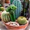 Plantes-541