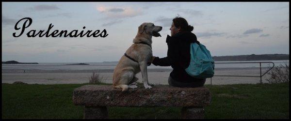« Un chien est bien plus qu'un animal, c'est un partenaire de vie. » Article Partenariat et Répertoire