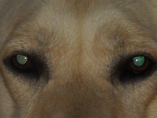 « Tout le chien est dans son regard. »