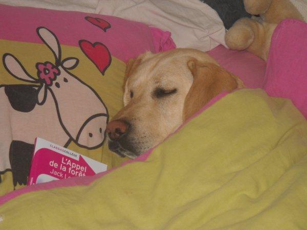 « Le chien est l'animal le plus vigilant : pourtant, il dort toute la journée. »