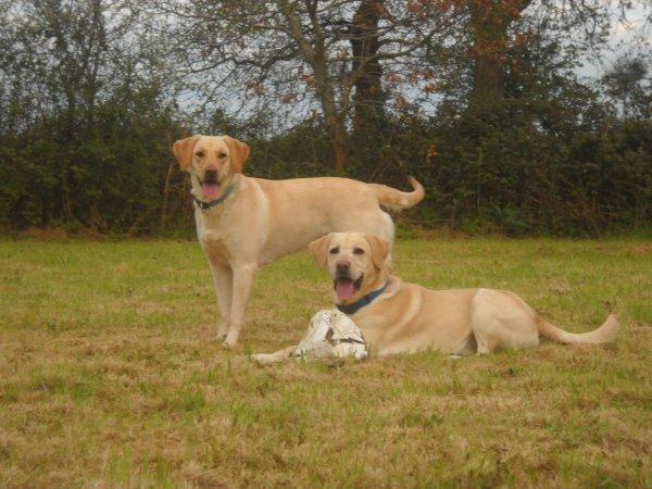 « Il existe en chaque chien une part de royauté. »