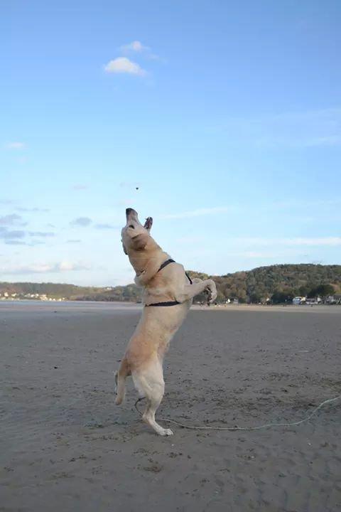 «Un chien, quand il reçoit un caillou, cherche plus à mordre le caillou que celui qui le lance.»