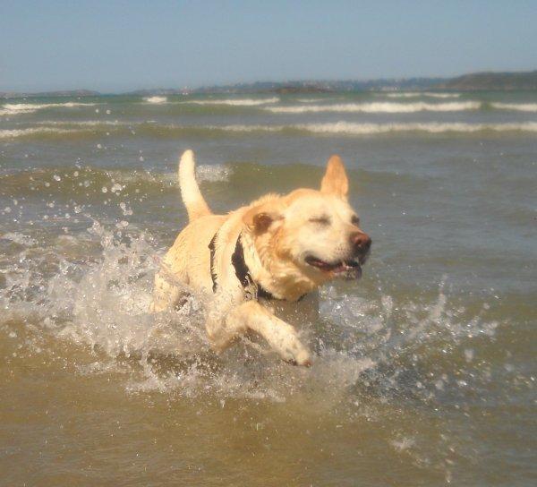 «Un chien, une plage, un brin de folie, beaucoup de bonheur...»