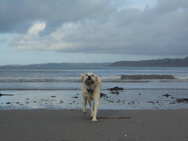 « Ce qu'il y a de meilleur dans l'homme, c'est le chien. »