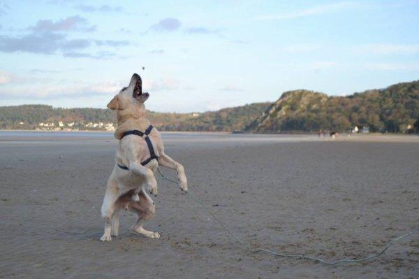 « Souple sur les pattes arrière, c'est plus facile pour sauter haut.»