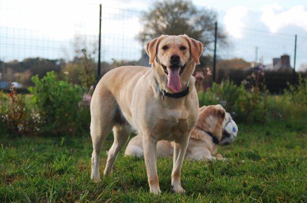 « Il faut donner du bonheur à un chien pour qu'il nous le rende. » ♥