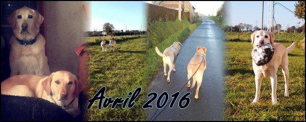 ► Bilan Mensuel Avril - 2016
