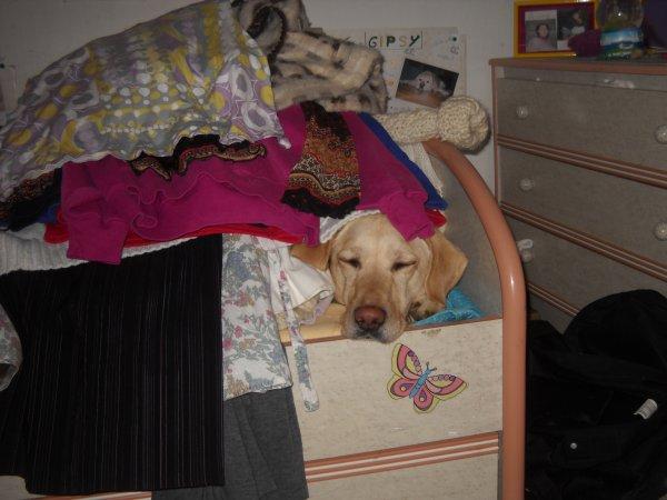 «La sieste sur le lit quand ma maitresse fait du rangement, c'est pas une bonne idée... »
