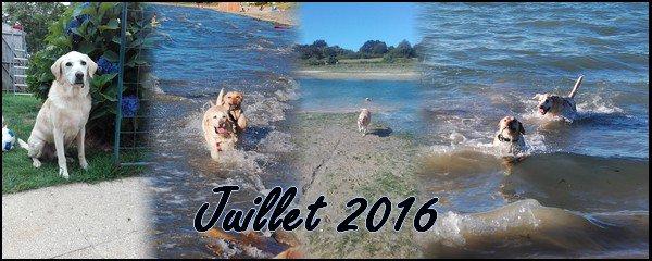 ► Bilan Mensuel Juillet - 2016