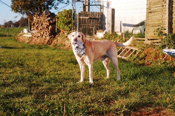 « Le voyage de la vie est nettement plus beau quand on voyage avec un chien. »