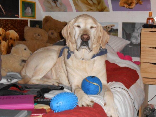 « Quand votre chien saute sur votre lit, c'est qu'il adore votre compagnie.» ♥