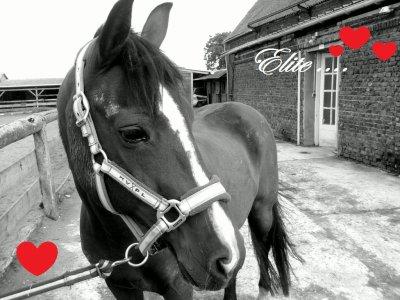 Je vois parfois dans le regard d'un cheval. La beauté inhumaine d'un monde d'avant le passage des hommes.   ELITE je t'aime <3