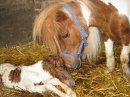 Photo de chevaux--------passion59