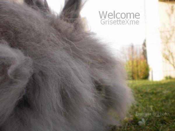 Article 1 Bienvenuesur Grisettexme