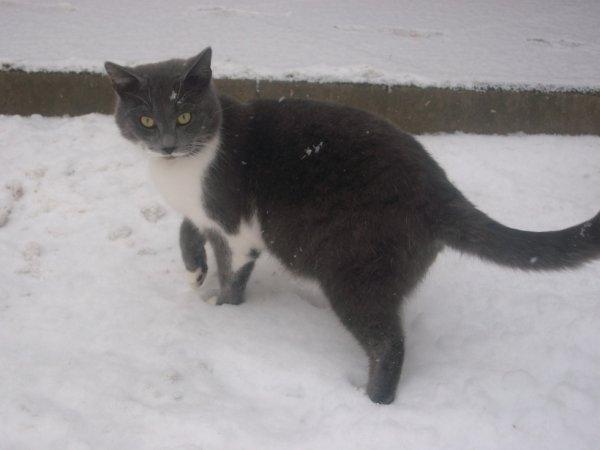 Mon chat !:)