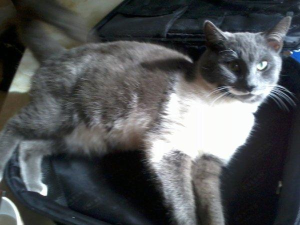 Mon chat Maintenant