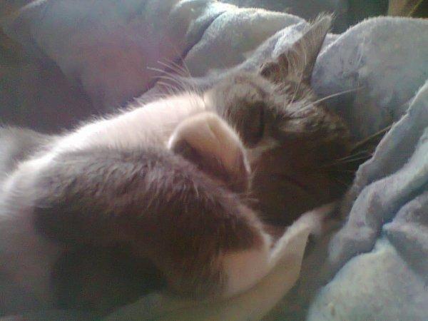 Mon chat A 3 mois