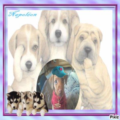 Le chien de la Mami de mes 5 amours ;-)