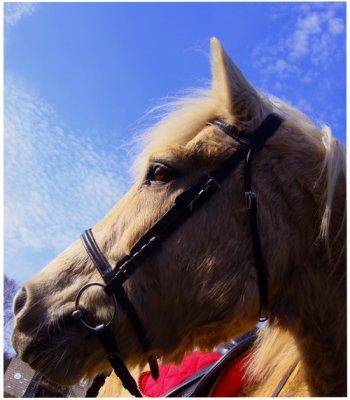 xlL℮s N٥uv℮lL℮s :: ((A côté d'un très beau poney , une Ferrari n'est pas très impressionnante.))