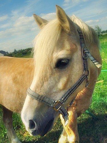 (L)((Être heureux à cheval, c'est être entre ciel et terre, à une hauteur qui n'existe pas.))