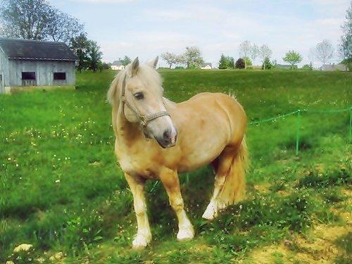 ((&Si un jour, ont tombent mon cheval et moi, relevez d'abord mon cheval ...))