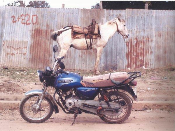 Daniel DALIGAN. Projet : Le cheval.....