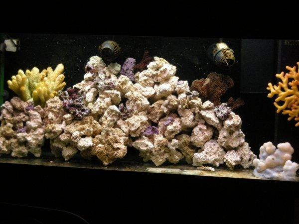 voilà + de 3 mois que la bac tourne,les algues on disparue et l'eau et de bonne qualité
