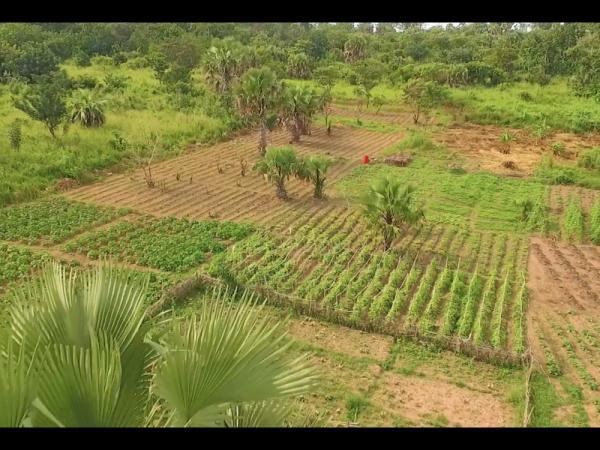 COP 22 : l'Afrique vise l'indépendance alimentaire grâce à sa paysannerie